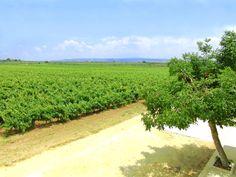 Affitto vacanze di un appartamento di lusso. Circondato da vigne e olivi, all'interno di una tenuta vinicola, tra Castelvetrano e Selinunte, vicino al mare.