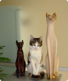 chat meme avec ses amis