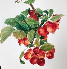 Watercolor And Ink, Watercolor Illustration, Watercolor Flowers, Watercolor Paintings, Fruit Painting, Guache, Edible Arrangements, Chocolate Art, Fruit Art
