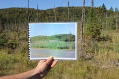 """The Conservancy's Brendan Quirion holds a """"before"""" photo of the area covered in phragmites (they show up bright green in the photo). Invasive Plants, Bright Green, No Response, Success, Landscape, Nature, Naturaleza, Scenery, Landscape Paintings"""