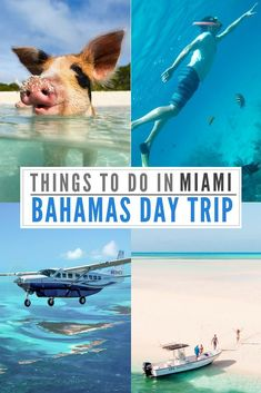 A not to be missed epic adventure: The Miami to Bahamas Day Trip by plane is an amazing Day Tour experience visiting the Swimming Pigs at Staniel Cay Barbados, Jamaica, Florida Travel, Travel Usa, Canada Travel, Bahamas Pigs, Bahamas Honeymoon, Bahamas Vacation, Italy Vacation