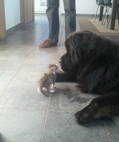 15 Dogs and Their Kitten BFFs - Pets Tips & Advice   mom.me