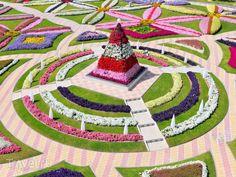 Разноцветные клумбы в парке Эль-Айна, ОАЭ / ОАЭ