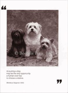 """""""Acquiring a dog may be the only opportunity a human ever has to choose a relative."""""""