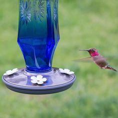 Amazon.com : Perky-Pet Sapphire Starburst Vintage Glass Hummingbird Feeder 8129-2 : Patio, Lawn & Garden