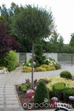 Ogród zmyślony - strona 212 - Forum ogrodnicze - Ogrodowisko