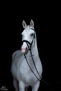 Shootingaktion Horses, Animals, Beautiful, Black, Animales, Animaux, Black People, Animal, Animais
