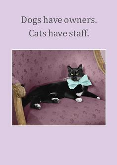 Dogs Have Owners. Cats Have Staff greetings card