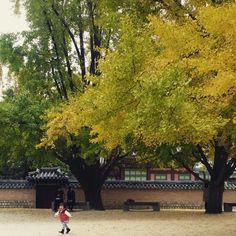 우와~~~가을~~~냄새 좋다. 경복궁 아이들과 함께^^  #감#가을#늦가을#일상#kid#감나무#어린이박물관#은행#가을나무