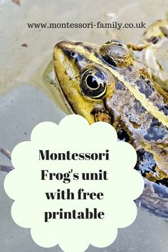Montessori Frog Unit with Free Frog Life Cycle Cards from Montessori-Family