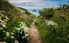 wanderthewood: The Mouls, Cornwall, England by Regis Lampert on Flickr