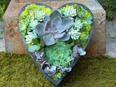 Succulent Heart Valentine Centerpiece, Valentine Gift Succulent Garden, Heart…