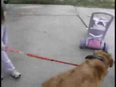 The internet into a single GIF. THIS IS AMAZING
