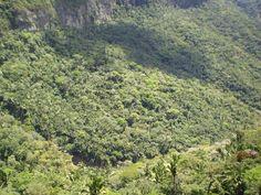 Ubajara River Valley - Ubajara National Park - Ceará