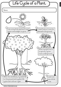 EngGr1T3-LIFESKILLS-PlantsSeeds-Plant-Life-Cycle