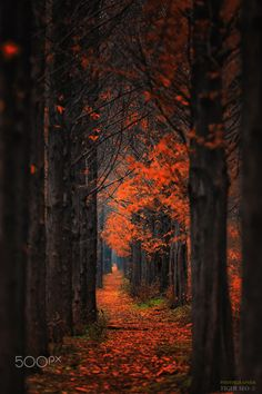 Pathway by Tiger Seo - Photo 130565557 - Autumn in Korea Fall Inspiration, Beautiful Places, Beautiful Pictures, Autumn Aesthetic, Fall Pictures, Fall Images, Belleza Natural, Pathways, Belle Photo