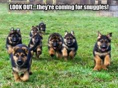 Funny Animal Pictures Of The Day – 23 Pics Everything you want to know about GSDs. Health and beauty recommendations. Funny videos and more