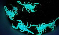 Arizona - nighttime scorpion . Yeah, they really glow.
