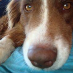 Sheba being nosey.