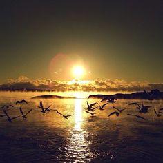 Simply stunning...  #hope #birds #horizon #sun #clouds