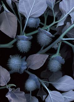 Graphic Flower And Plant Images : Photo