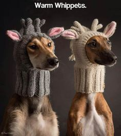 Such hat, much warm . When you know it is time to put down those needles! �