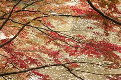 The beauty of Japan by masato_55, via Flickr