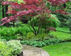 Gorgeous planting with Japanese maple. Three Dogs in a Garden: Part 2 Gardens with an Uneven Terrain