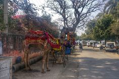 One Month in India: Udaipur · Enda Phelan