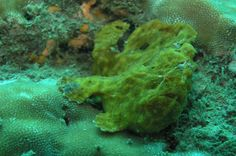 fish underwater   - Costa Rica