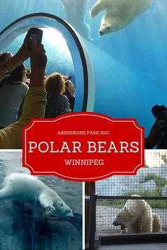 Video and short post about zoo's polar bear feature