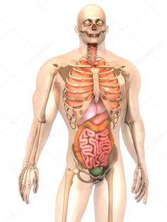 fogyás belső szervek fogyás hogyan