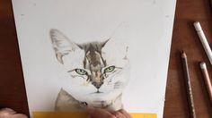 Time-lapse film van de opbouw van de tekening van #Diva, een #abessijnse #kat…