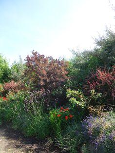 A Visit to Thomas Hobb's Garden