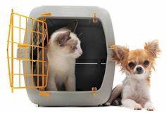 Excursión con tu animal de compañía ¡¡En avión!! - Animal Care Con tantos días festivos y puentes es mejor llevar a tu animal de compañía contigo, así sea en avión #SoyAnimalCare