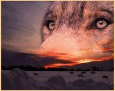 If you don't make time to laugh, you have no music in your heart. Like the wolf during a full moon, May your heart have many songs to sing. Native American Wolf, Native American Pictures, Native American Wisdom, Native American History, American Indians, Wolf Images, Wolf Pictures, Wolves And Women, Wolf Husky