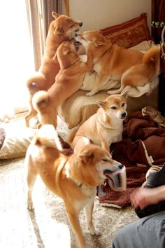I don't know-hope they can care for so many sweet pups-probably