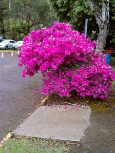 Primavera Parque das Laranjeiras
