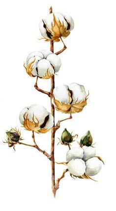 Botany on Behance