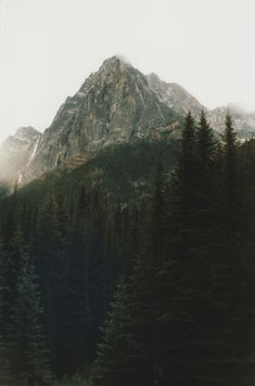alpine forest mountains shrouded mist nature coniferous evergreen trees