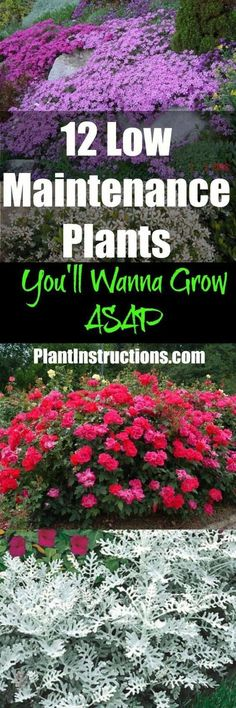 12 Low Maintenance Plants That Anyone Can Care For blooming Perennials maintenance Perennials full sun ideas Landscaping Plants, Front Yard Landscaping, Garden Plants, Landscaping Ideas, Backyard Ideas, Hydrangea Landscaping, Driveway Landscaping, Garden Shrubs, Bonsai Plants