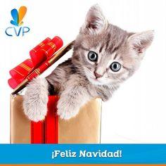 ¡Feliz navidad! Sorprende a tu gato con el mejor regalo. Un día de tranquilidad y diversión en nuestro Hotel Para Gatos. ¡Le encantará! #CatLovers  #ServiciosCVP #Mascotas #CVP #PetLovers #Pets #Perros #Gatos #Dogs #Cats #Mascotagram #Petstagram #PetShop #DogLovers #CatLovers #NoAlMaltratoAnimal #LovePets #Instapet #ILoveMyPet #DogLife #Veterinaria