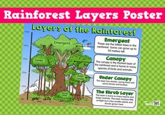 Rainforest Layers Poster