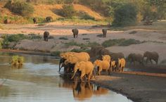 Visit the iconic Kruger National Park, exploring private safari reserves, where the game viewing is outstanding and there are safari lodges to suit all travelling styles! African Animals, African Elephant, African Safari, Majestic Animals, Animals Beautiful, Kruger National Park, National Parks, Private Safari, Elephant Images