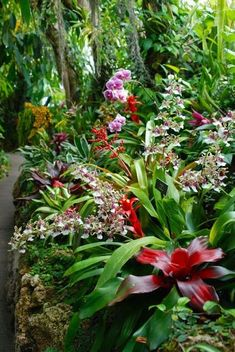 Combination of Orchids and Bromeliads.   In Honolulu, plant on east side of building where you get morning sun and afternoon shade.