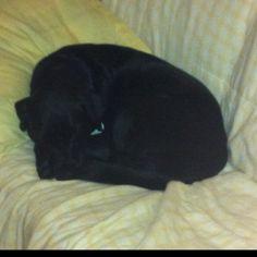 Ellie sleeps curled in a teeny tiny ball.