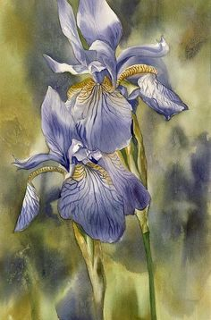 "blue iris by Alfred Ng, watercolor on paper, 16""x24"""