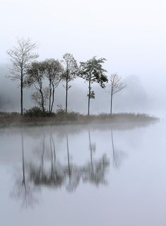 Loch Ard Trees In The Mist by Grant Glendinning is part of Mists - Trees reflecting on a mist covered Loch Ard, Stirlingshire,Scotland Watercolor Landscape, Landscape Art, Landscape Paintings, Landscape Photography, Watercolor Art, Nature Photography, Reflection Photography, Scenic Photography, Aerial Photography