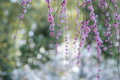 Spring Snow by Kaz Watanabe, via 500px