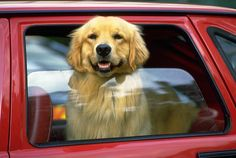 Dog friendly taxi service and car rentals available for anywhere in Maharashtra.in to book your pet friendly car rental. Le Mans, Costa Rica, Deaf Dog, Pet Friendly Hotels, Dog Car, Pet Travel, Travel Tips, Pet Care Tips, Family Dogs